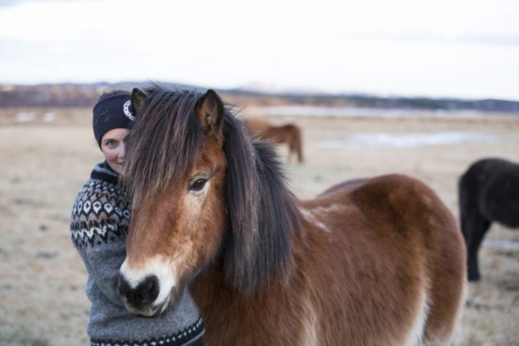 Icelandic horse, horse riding, countryside horse riding tour in Iceland, Golden Circle & horse riding