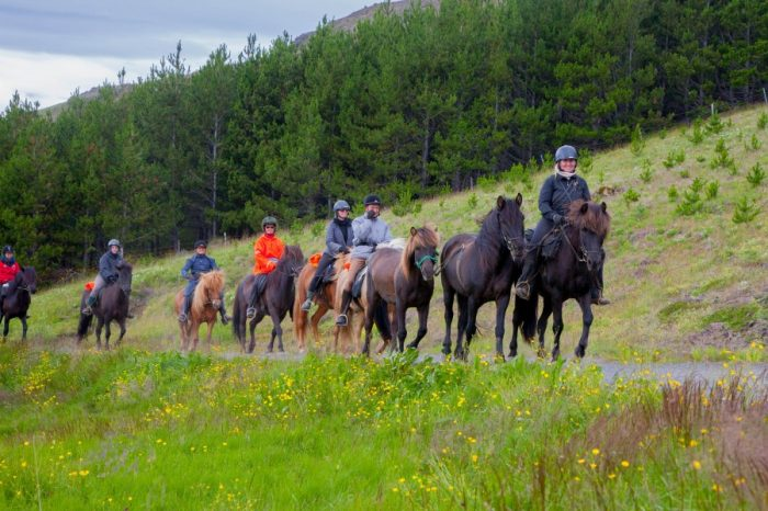 Golden Circle & Horse Riding