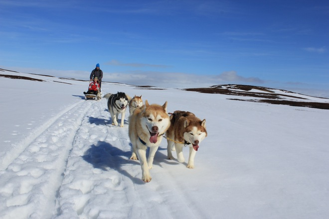 Snow Dog Sledding